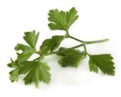 flatleaf parsley