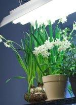 fluorescent light, light for house plants
