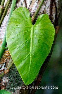 rainforest plant