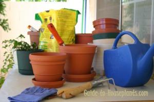 repotting house plants, potting house plant, repotting