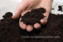 potting soil, potting mix