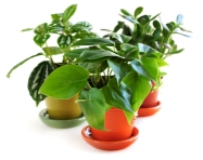 house plants encyclopedia, identifying house plants, common house plants, types of house plants