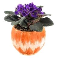 african violet plants, african violet pots, caring for african violets