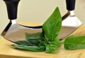 how to keep cut basil leaves fresh