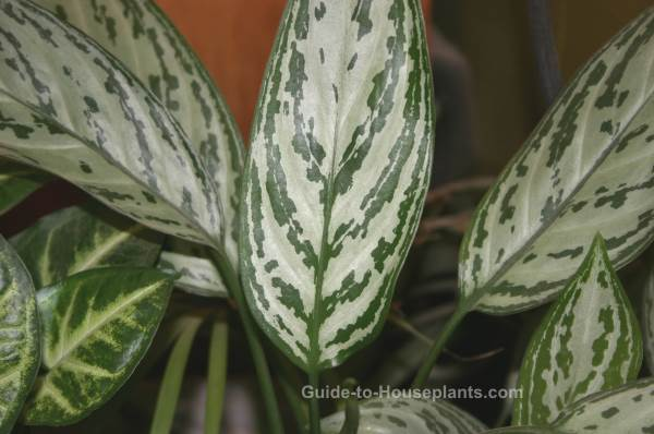 The complete practical guide to successful houseplants,...