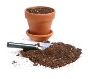 House Plant Care