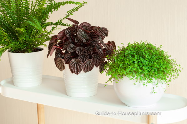 Indoor Plant Stands Decorative Solutions For House Plants