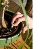fertilizer spike, fertilizing house plants