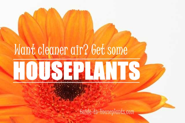 plants clean air
