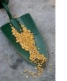 fertilizer granules, house plant fertilizer