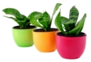 house plant container, house plant pots, indoor planters