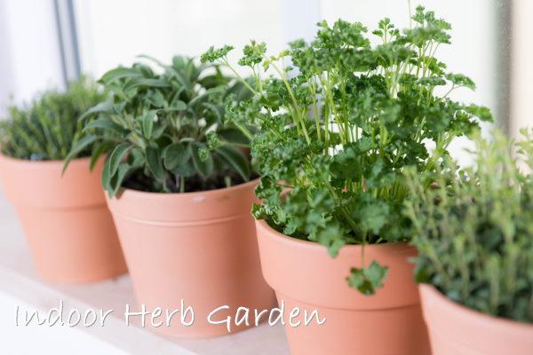 Indoor Herb Gardens How To Grow A Window Herb Garden
