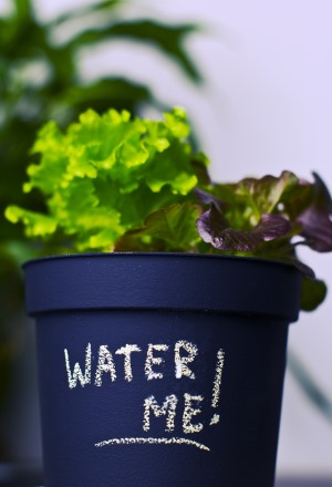 plant moisture meter, watering house plants, houseplant moisture