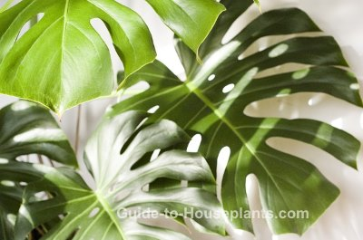 Tropical House Plants Pictures