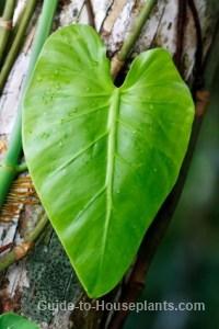 tropical rainforest plant
