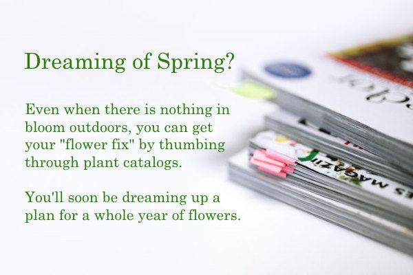 Seed And Plant Catalogs Indoor Plants