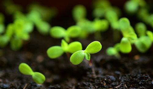 seedlings, seed starting