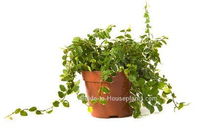 your house plants