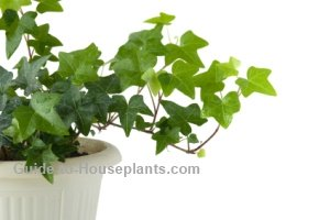 Common House Plants with Pictures on
