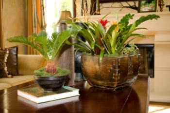 exotic house plants
