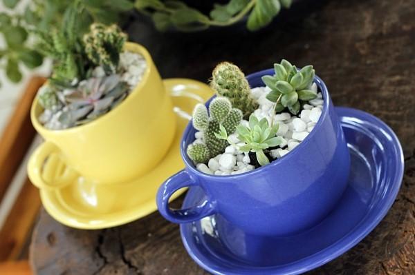 indoor rock garden, succulent garden, cactus garden