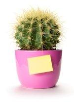 cactus plant, office plant