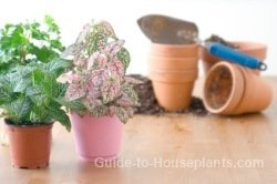 Repotting House Plants: When, Why, and How-tos